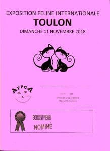 nominé Best poil court