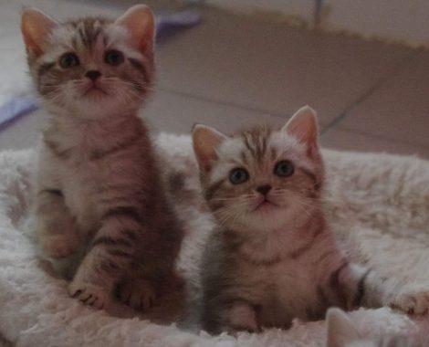 2-filles-choco-Copie.jpg